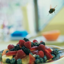 plase-insecte-3